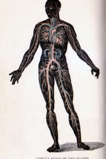 Antique Anatomical Illustrations