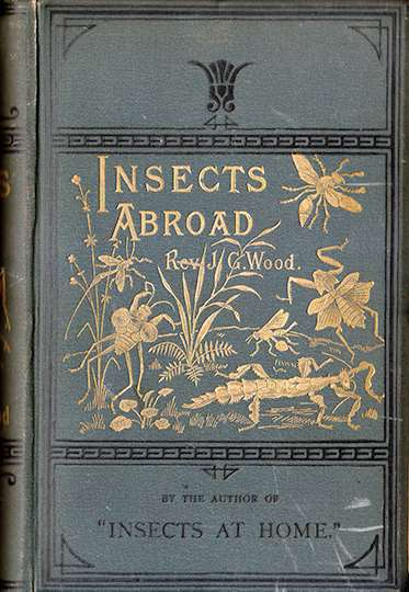 Insects Abroad