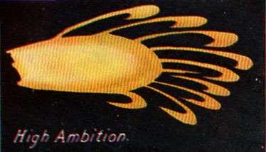 High Ambition