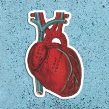 Anatomical Heart Vinyl Sticker   Vintage Victorian Large Human Heart Anatomy   Antique Medical Love Science, Stocking Stuffer Small Gift