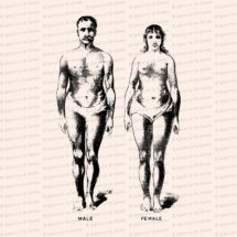 Vintage Edwardian Anatomical Clipart   Antique Comparison of Size and Form of Male and Female Bodies SVG PNG JPG